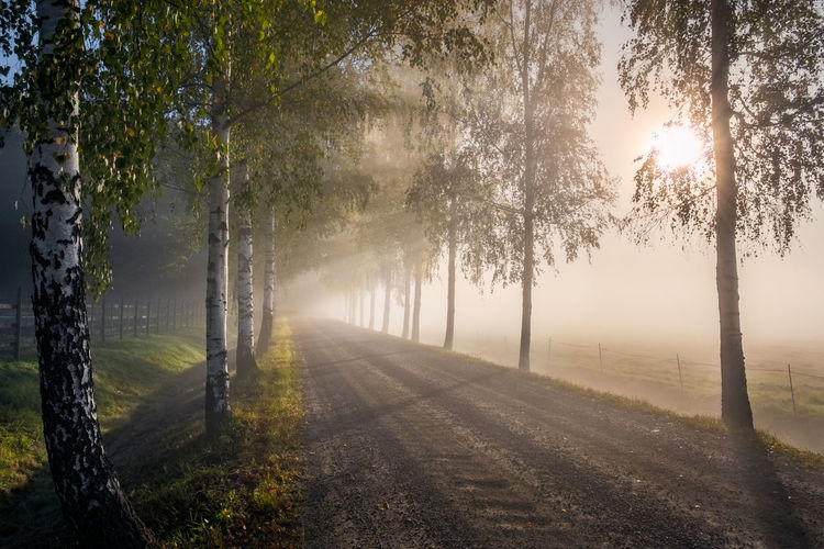 Sunlight streaming through trees on road