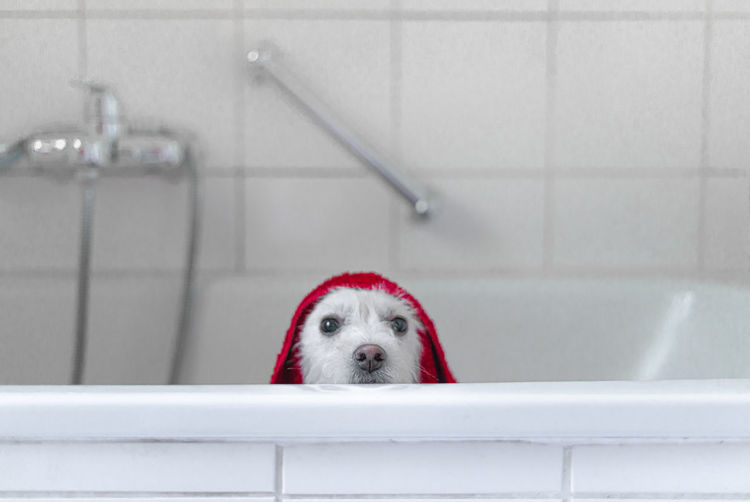Portrait of dog in bathtub