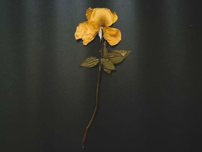 6yearsago Rose - Flower Rose🌹 My Heart Puppy Love