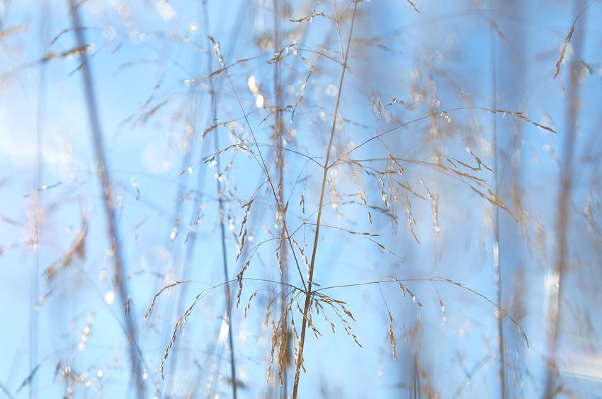 Widdum_2018_08_11202 Abstract Nature Grass Lines Low Focus Range Abstract Background Defocus Backgrounds Blue Branch Brown Close-up Cold Background Day Fragility Low Angle View Nature No People Outdoors Plant Selective Focus Sky Summer Sun Light Warm Light