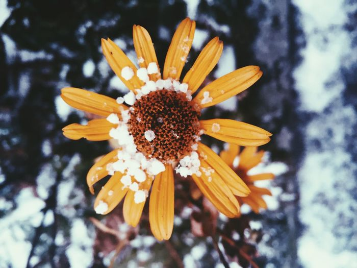 How Do You See Climate Change? Check This Out EyeEm Best Shots Outdoors Snow The Week On EyeEm Winter Flowers Close-up IPSWeather Focus Object Maximum Closeness