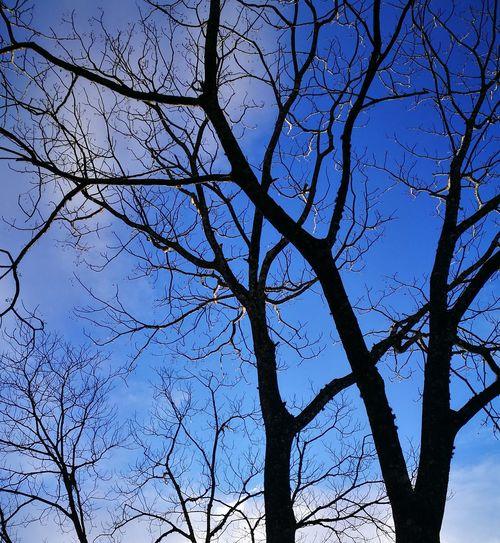No leaf Sky