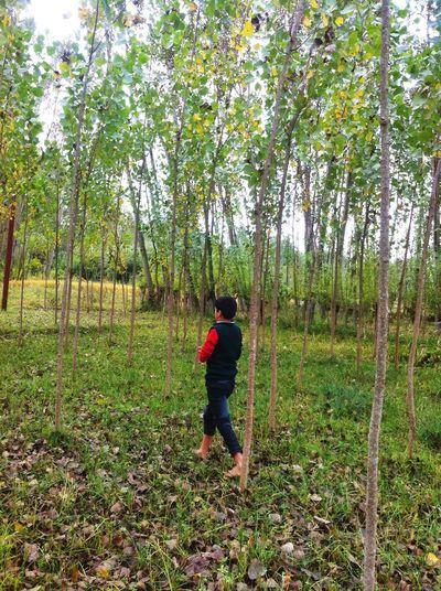 IPSFall Autumn Tree Leaves