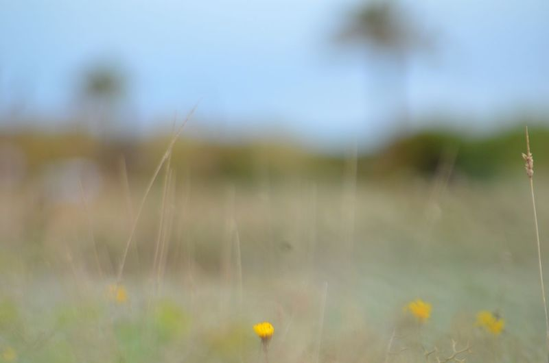 Nature EyeEm Nature Lover EyeEm Gallery Plant Flower Flowering Plant Field No People Nature Focus On Foreground Fragility Growth Land Freshness Outdoors Selective Focus Beauty In Nature