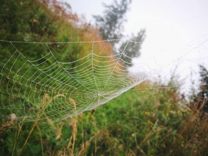 Close-up of spider web against plants