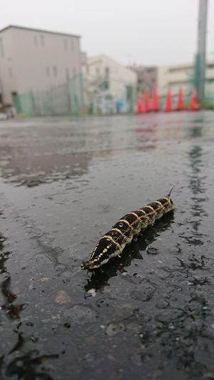 雨の中、お疲れ様! Capture The Moment Rainy Day Nature Insect Water Rainy Season Wet RainDrop