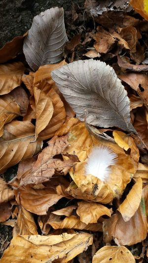 leaves Feather_perfection Feather  Feathers, Soft, Contrast, Light, Delicate, Fragile, Light And Dark Nature Outdoors No People Beauty In Nature Fragility Close-up Autumn Autumn Leaves Autumn Colours