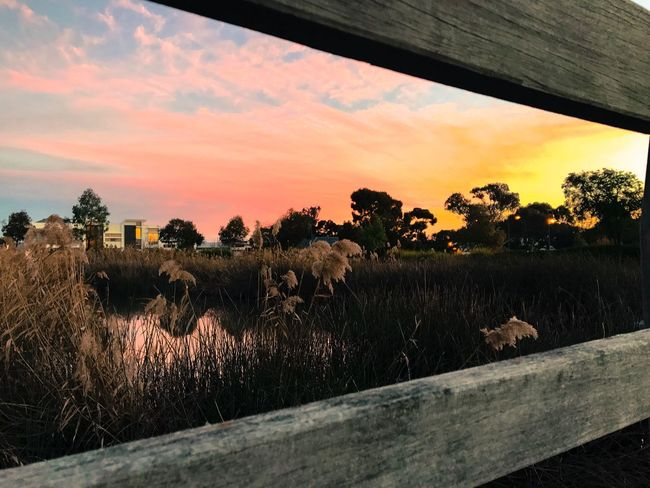 Sunset Outdoors Sky Grass Landscape Tree Field Nature No People Cloud - Sky Beauty In Nature Grazing Scenics Day EyeEm Nature Lover Taking Photos Eye4photography  Enjoying Life Capture The Moment Wooden Bridge