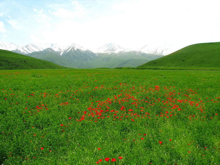 Herb and May Cloud - Sky Flower Freshness Green Color Landscape Mountain Nature Red