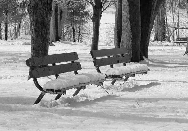 NYC Queens NYC City Weather City Life Queens NYC Street Photography NYC Photography Tree Snow Winter Cold Temperature Tree Trunk Park - Man Made Space Road Sky Park Bench Snowcapped Weather The Great Outdoors - 2018 EyeEm Awards