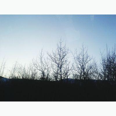 Forest Mongolia Beauty Sky