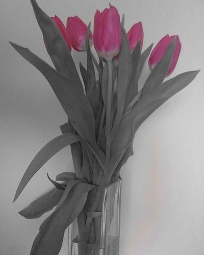 Colorless but beautiful Sunday. Mood Sunday Tulips Pink Blackandwhite Grey Lifeingrey Lifeinmono Monochrome Mik Ikozosseg Ikozosseghungary Ig_hun Ig_hungary Photooftheday Flowers