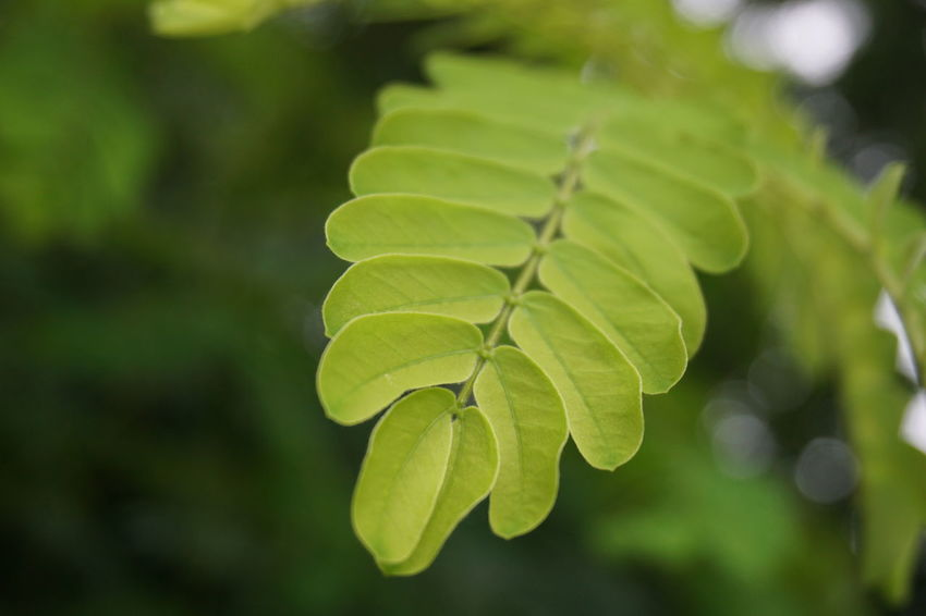 # Beauty In Nature Close-up Green Color Leaf Nature No People Plant