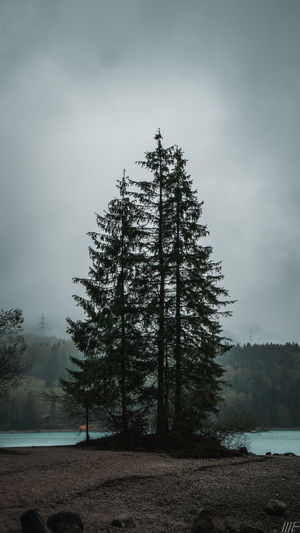 Tree Plant Sky Nature Land Fog Beauty In Nature Tranquility Non-urban Scene Scenics - Nature Tranquil Scene Forest Cloud - Sky Growth Outdoors Day No People Water Idyllic Pine Tree Coniferous Tree