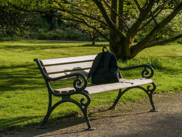 Absence Beauty In Nature Bench Day Empty Field Grass Green Color Growth Land Nature No People Outdoors Park Park - Man Made Space Park Bench Plant Relaxation Seat Tranquility Tree