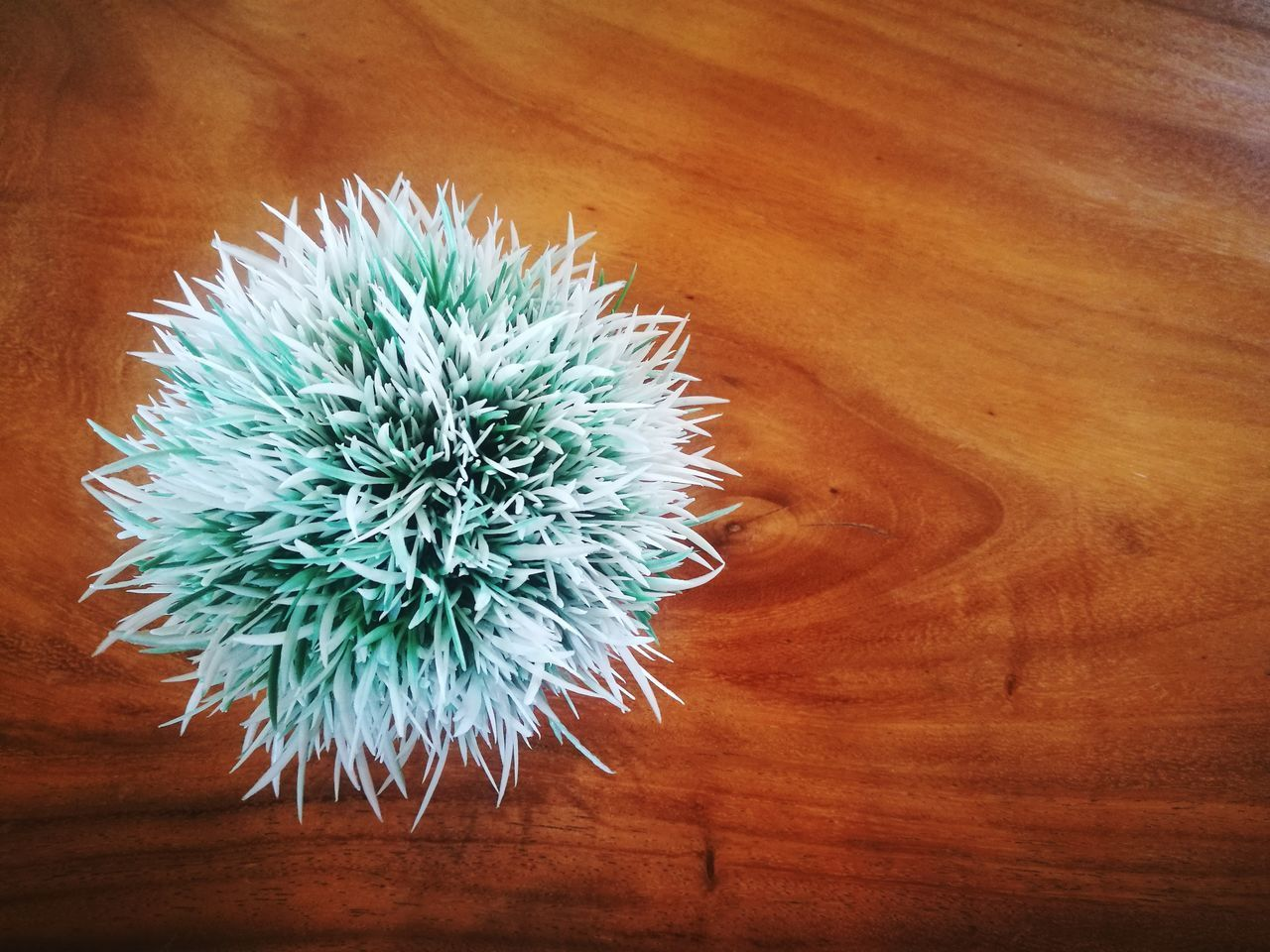 plant, no people, close-up, beauty in nature, growth, table, wood - material, freshness, flower, flowering plant, indoors, high angle view, nature, succulent plant, cactus, flower head, directly above, vulnerability, day, fragility