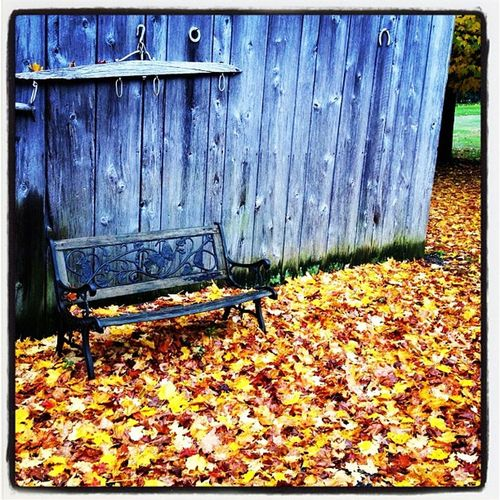 The Best Seat. #foliage Fall Cowansville Natural Quebec_scene Foliage Quebec_scenery Quebec Rustic Iphoneonly Photooftheday Picoftheday Bedford All_shots Instamood Bestoftheday Instagood Webstagram Nature Igharjit Leaves Qc