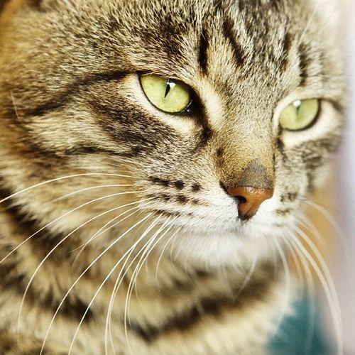 Cat Cats Animals Barsik
