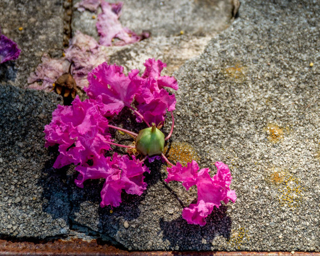 The Party's Over Check This Out Hanging Out Taking Photos Flowers Flowerporn Flower Collection Flower Photography Nature Nature_collection Purple Purple Flowers Colour Color Sidewalk Sidewalk Photography Urban Nikon Nikonphotography Eyeemphotography EyeEm Best Shots Artistic Photo Beautiful