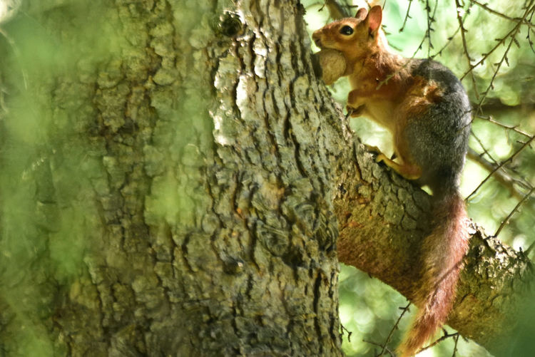 Animal Animal Themes Animal Wildlife Animals In The Wild Branch Day Looking At Camera Mammal Nature No People One Animal Palamut Plant Plant Bark Rodent Sincap Squirrel Textured  Tree Tree Trunk Trunk Vertebrate