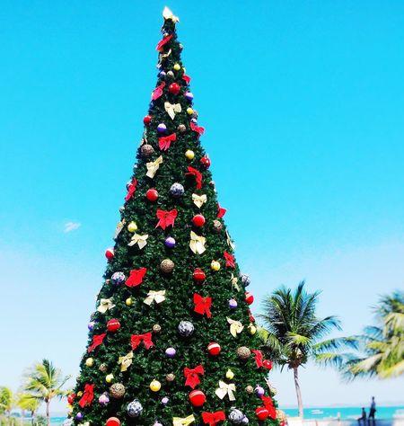 Christmas Tree Christmastime Christmas Decorations Christmas Around The World Christmas Spirit Christmas Market Christmas Ornaments Holidays ☀ Beach Coconut Tree