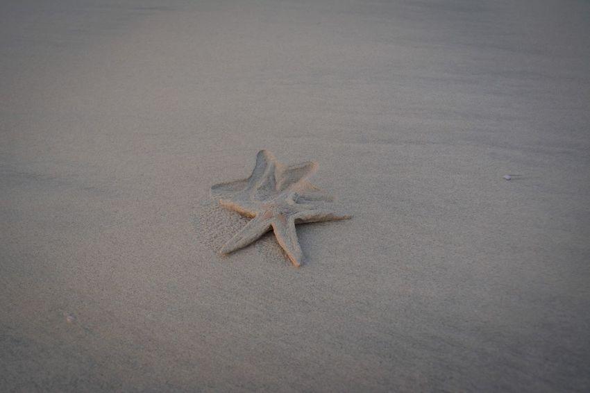Starfish moving Animal Animal Themes Animal Wildlife Animals In The Wild One Animal Sand Starfish  Nature Beach Land Sea Outdoors Star Shape No People