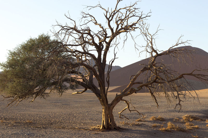 Arid Climate Bare Tree Beauty In Nature Branch Day Dead Plant Dead Tree Landscape Namibia Desert Namibia Landscape Namibian Landscape NamibiaPhotography Nature No People Outdoors Scenics Sky Tranquil Scene Tranquility Tree