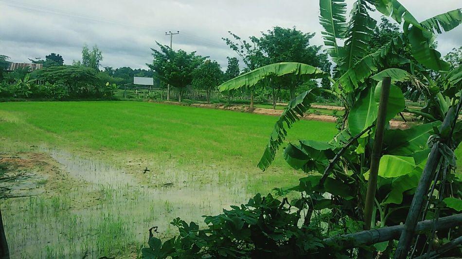 Greenfields Landscape Fieldscape