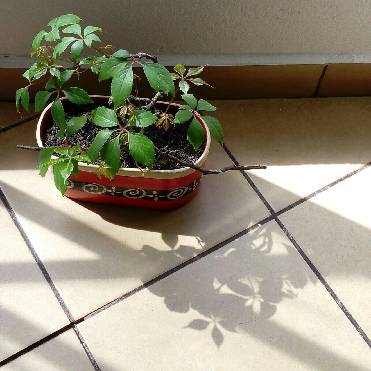 growth, shadow, plant, potted plant, sunlight, no people, green color, nature, indoors, leaf, day, freshness, fragility, close-up