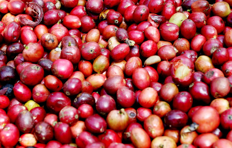 Ripe Coffee Beans Backgrounds Beans Close-up Food Food And Drink For Sale Freshness Fruit Full Frame Healthy Eating Large Group Of Objects Market No People Outdoors Red Red Retail  Ripe Fruit