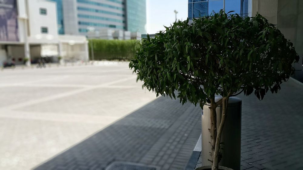 Tree Close-up Architecture Built Structure Outdoors No People Skyscraper Scenics Garden Path Dubai UAE Mix Yourself A Good Time The Week On EyeEm