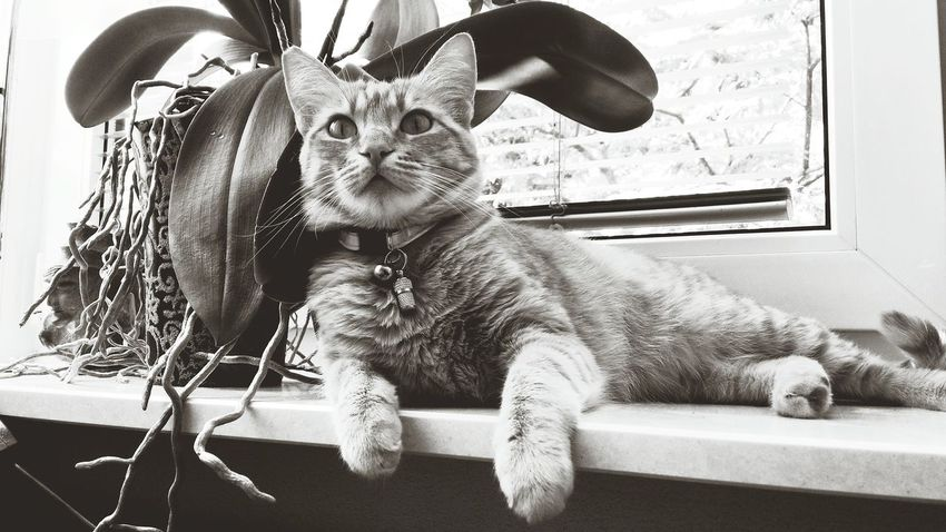 Taking Photos Check This Out Beautiful Cats Black & White Cute Cats Cute♡ My Cat :) Cute Pets Cats At Home Sweet Home At Home :) My Cat😺🐈 My Cat Neko :3 My Cat♥ Cats Are Always The Best Models Cats Of EyeEm Black&white Monochrome Photography Huaweig7 Pet Portraits