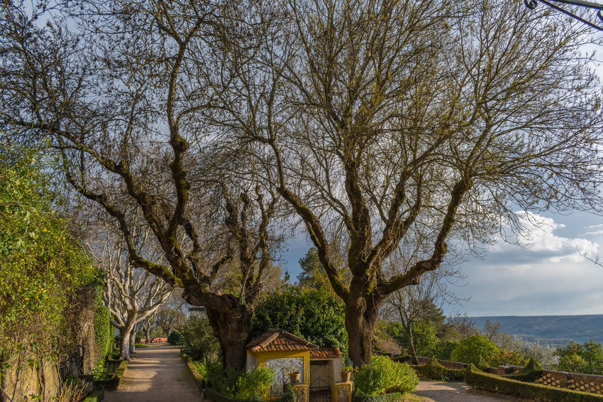 Castle of Abrantes Portugal Architecture Bare Tree Beauty In Nature Branch Day Growth Nature No People Outdoors Scenics Sky The Way Forward Tranquility Tree