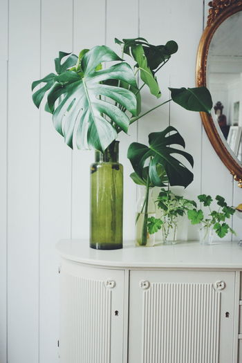 propogation of green plants Interior Design Interior Home Interior Home Sweet Home Plant Plants Plants And Flowers Plant Nursery New Life Botany Leaf Propagation Cuttings Greenhouse Herb Leaf Kitchen Plant Green Color Potted Plant Houseplant Pot