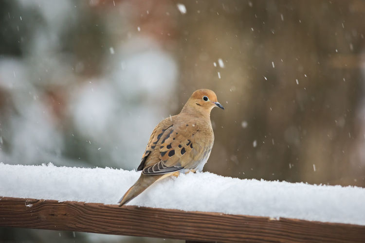 Bird perching on a snow