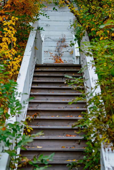 Beautiful stairs going up to a old building in the archipelago in autumn. Autumn Beauty In Nature Change Day Goingup Growth Leaf Nature Nextlevel No People Outdoors Staircase Steps Steps And Staircases Upstairs Urban Vertical Elevate
