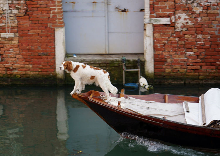 Dog on gondola in venice