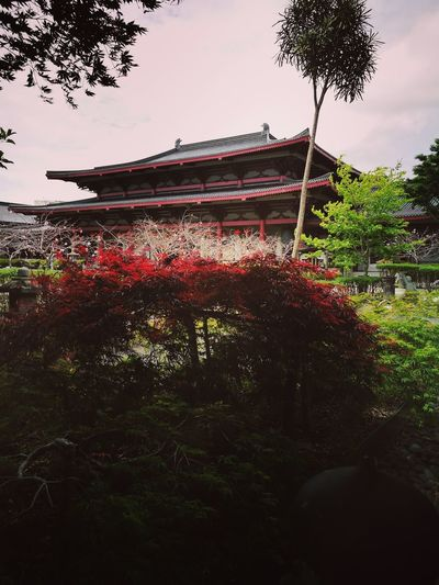 Tree Sky Cloud - Sky Day Growth Nature Outdoors Water No People Beauty In Nature Freshness Pixelated Hall New Zealand Museum Budist Tempel Foguangshan Pray Wish Inner Peace History Travel Destinations Roof Close-up Architecture