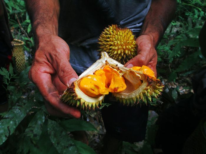 Midsection of man holding durian at farm