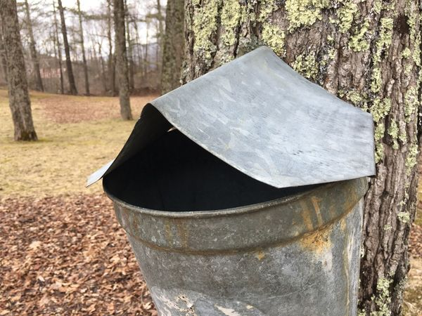 Maple sap pail in the Green Mountains of Vermont Green Mountains Vermont Lifestyle Vermont Maple Sap Harvesting Maple Syrup Maple Tree Tree Plant Nature Forest Day Land No People Trunk Tree Trunk Outdoors Sunlight Metal Tranquility Close-up Container Growth Focus On Foreground