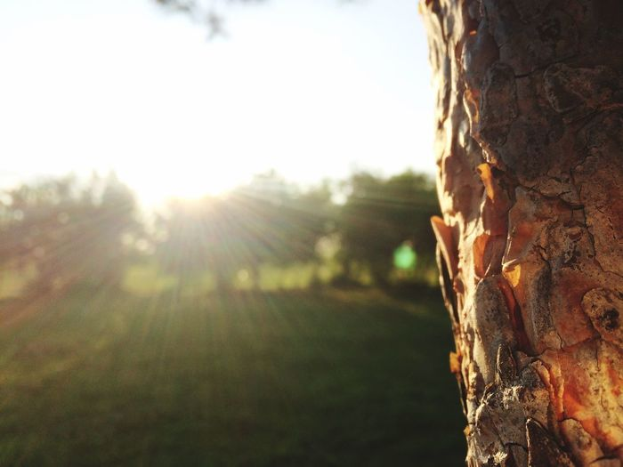 Those sunny days Amaturephotography Sunlight Sky Day Nature Plant Tree Close-up No People Outdoors Lens Flare Land Landscape Sun Environment Tree Trunk Field Grass Sunbeam Selective Focus The Still Life Photographer - 2018 EyeEm Awards