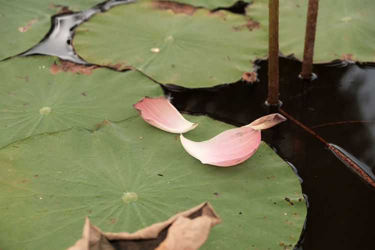 Leaf Plant Part