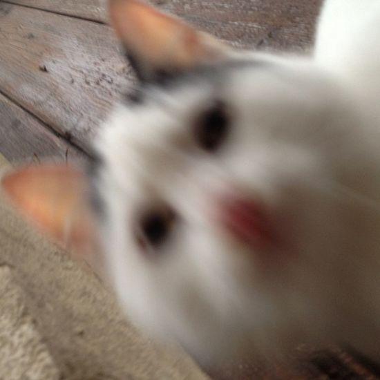 Hier: #catcontent Cat Katze Catcontent Catsofinstagram Mieze Miezekatze
