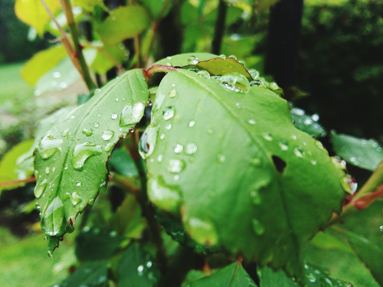 leaf, drop, water, green color, nature, wet, close-up, raindrop, growth, no people, day, fragility, outdoors, plant, freshness, beauty in nature