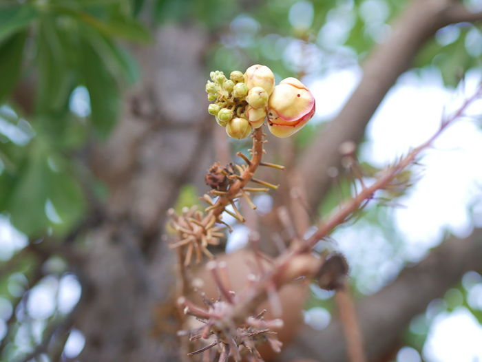 Tree view Plant Growth Tree Freshness Flower Flowering Plant Beauty In Nature Close-up Branch Focus On Foreground Day Vulnerability  Nature Fragility Selective Focus Low Angle View No People Outdoors Bud Petal Springtime Flower Head