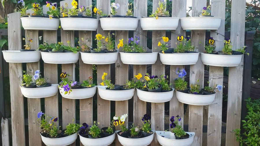 Potted flowering plants hanging on wooden planks in garden