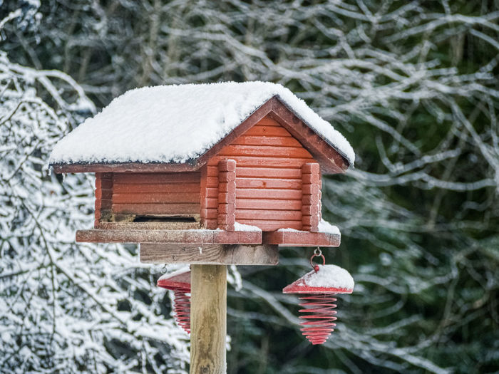 Close-up of birdhouse on snow covered tree