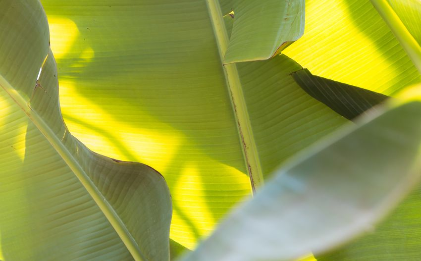 Close-up of yellow leaves on plant