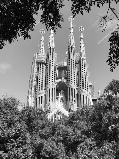 Sagrada Familia Temple - Building IPhoneography Iphonephotography Iphoneonly Black & White Black And White Blackandwhite Bw_collection Architecture_collection Eye4photography  EyeEm Gallery Built Structure Gaudi Gaudì Architecture Work Architecture Barcelona Sagrada Familia Sky Tree Low Angle View Plant Architecture Built Structure Building Exterior Religion Building
