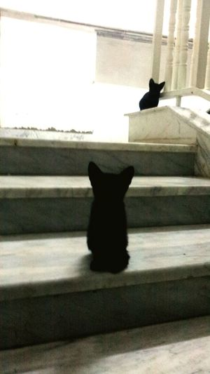 Black Cats Animals Cat Check This Out